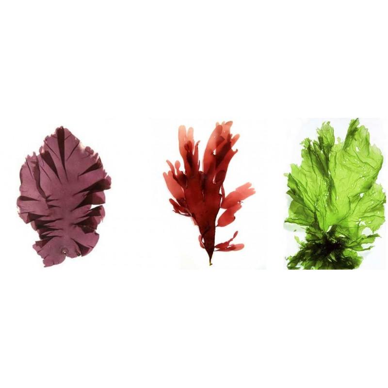 tartare d 39 algues proven ale. Black Bedroom Furniture Sets. Home Design Ideas